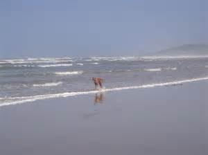 strand-hond